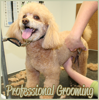 Dog Grooming Coppell